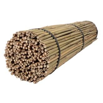 Tyczki bambusowe 60 cm 10/12 mm - 250 szt.