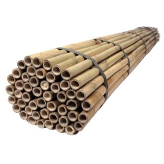Tyczki bambusowe 210 cm 24/26 mm - 50 szt.